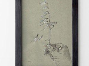 הדפס של רישום של שעורת קיץ על נייר אמנות